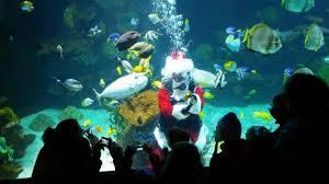 columbus zoo christmas lights reviews of kid friendly attraction columbus zoo aquarium powell
