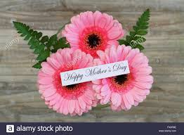 happy mother u0027s day card with pink gerbera daisies stock photo