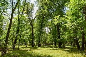 oklahoma forest images Choctaw 150 midwest land group jpg