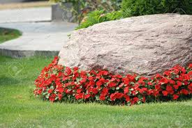 Gardens With Rocks by Landscaped Flower Garden With A Rock And Red Flowers Stock Photo