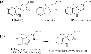 unraveling the intramolecular cyclization mechanism of oxidized