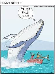 Whaling Meme - 53 best whale humor images on pinterest ha ha whale and funny stuff