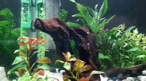 idee deco aquarium 2 aquariums nanocube dans ma cuisine 1 deco et plantes youtube