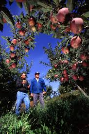 Agriculture Climate Network   agriculture and climate change     Though Appletown in this article is a theoretical location  producers sharing what practices work for