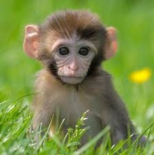 the meaning and symbolism of the word monkey