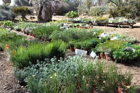 Ucr Botanical Gardens Ucr Today Botanic Gardens Plant Sale