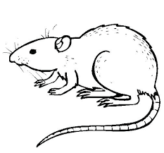 coloring page of a rat rat coloring pages rat rat coloring pages printable goodpr me