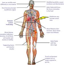 Human Anatomy Full Body Picture Anatomy Of The Whole Human Body Full Body Anatomy Organs Kool Tk