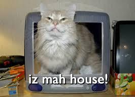 Lolcat Meme - lolcats teh meme wiki fandom powered by wikia