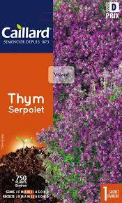 thym serpolet cuisine graines caillard thym serpolet jardin des gazelles jardinerie