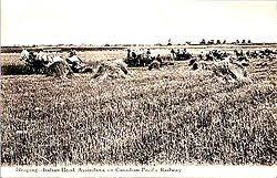 Bell Barn Indian Head Indian Head Saskatchewan Wikipedia
