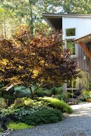 Pflanzen Fur Japanischen Garten Japanischer Ahorn Im Garten 50 Gestaltungsideen