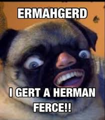 Ermahgerd Animal Memes - ermahgerd ifunny