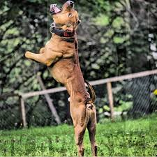Is It Legal To Bury Your Dog In The Backyard - how to build a spring pole exercise equipment for dogs