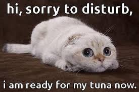 Mean Cat Memes - cat memes archives the casino images netthe casino images net