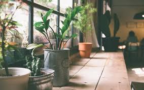 apartment plants best plants for apartments selectmyspace