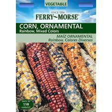 ferry morse corn ornamental rainbow mix seed 2060 the home depot