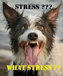 Depressed Pug Meme - who said i m stressed depression dog know your meme