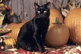 halloween pumpkin desktop backgrounds halloween cat wallpaper wallpapers browse