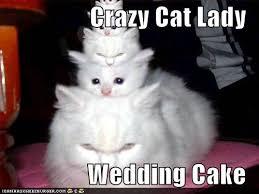 Cat Lady Meme - cat lady wedding cake dobrador cats crazy cat lady