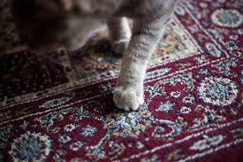 Cats Paw Rug Scratching Post Alternatives 6 Everyday Items That Keep Kitties