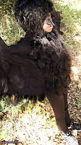 maleficent diaval crow halloween costumes photo 6 7