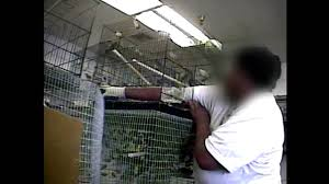 Petsmart Small Animal Cages Sun Pet Undercover Investigation Youtube