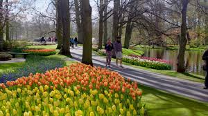 keukenhof flower gardens flowering splendour in the garden of europe ifly klm magazine