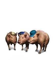 pigs witcher wiki fandom powered wikia