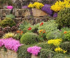 best plants for rock gardens rock garden plants perennials and