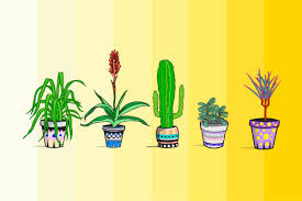 Best Plants For Air Quality by The Best Air Purifying Plants Reader U0027s Digest