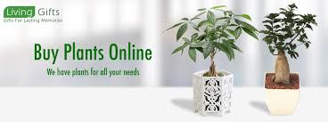 send gifts to india 22 best plant nurseries in delhi images on bonsai