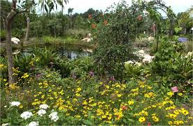 native plants landscaping florida native plant society blog the truth about butterfly
