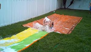 Backyard Slip N Slide Dog Gets An Unexpected Surprise On Slip U0027n Slide Daily Mail Online