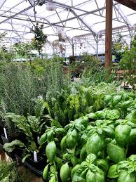 fort valley nursery
