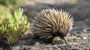 imagenes animales australia australia s animals tourism australia