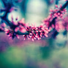 beautiful spring colours ipad air wallpaper download iphone