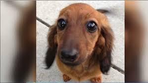 dies during grooming at petsmart wfla