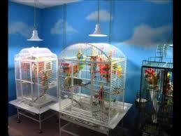 uv light for birds full spectrum lighting for parrots by featherbrite youtube