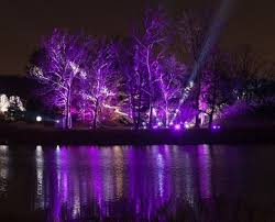 illumination tree lights at the morton arboretum returns with new