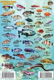 franko maps northwest coast ocean creatures u0026 kelp