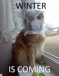 Winter Is Coming Meme - winter is coming meme guy