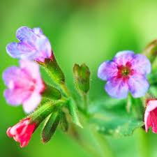 Plants That Survive With No Light Shade Plants 10 Plants That Don U0027t Need Sun Bob Vila