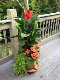 Potted Plant Ideas For Patio by Best 20 Canna Lily Ideas On Pinterest Tropical Backyard