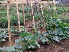 easy pea trellis pea trellis garden pinterest growing green beans pea