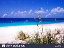 sea oats pink sand beach eleuthera island bahamas stock photo