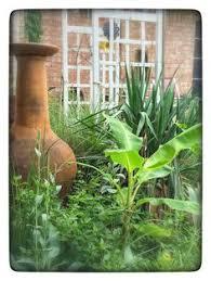 Backyard Fort Worth - salvia garden fort worth texas ffe421 backyard dream garden