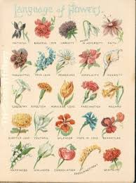 just flowers florist language of flowers flower meaning just flowers