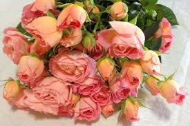 wholesale roses ca spray pink parasol wholesale flowers for weddings and