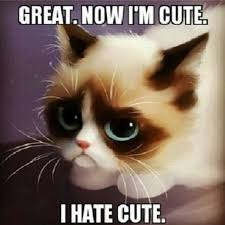 Good Grumpy Cat Meme - grumpy cat meme grumpy cat pictures and angry cat meme